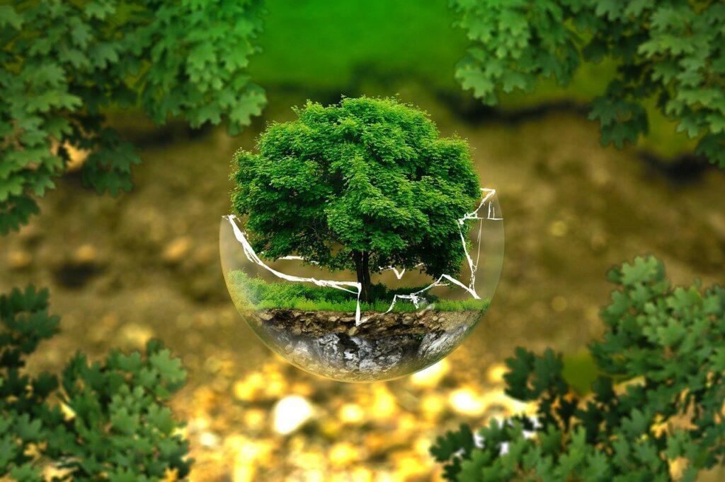 Árbol en bola de cristal para medio ambiente